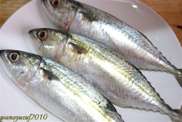 """""""Ikan Kembung"""""""